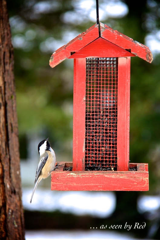 """Busy day at the """"local hot spot"""" for sunflower seeds - :) The ground is consistently covered with the white stuff  - refills needed almost daily."""