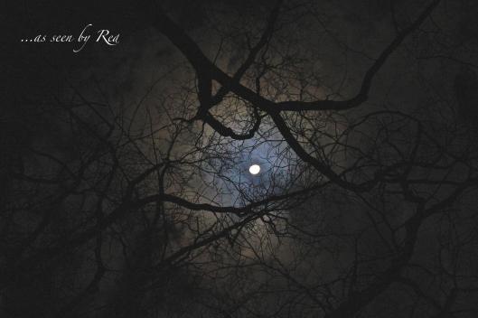 Moonlit Evening
