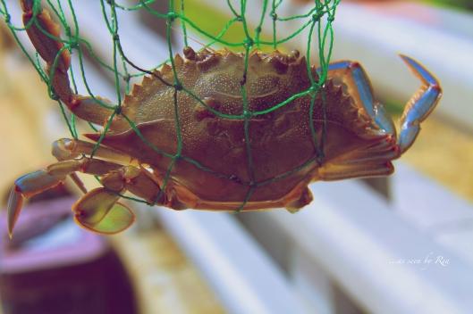 Crabbin'